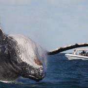 whale-watching-Sri-Lanka-3-840x385