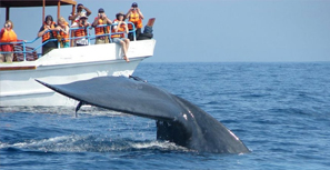 Whales & Dolphins watching in Sri Lanka