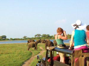 Sri Lanka Tour Company Sky Ferns Tours